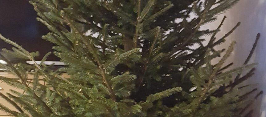 jugendfeuerwehr sammelt weihnachtsbäume