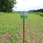 Wiese für Bienen und Insekten, Öko Blumenwiese