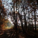 Sonne scheint durch Bäumen und letzten Nebelschwaden auf mit Laub bedeckten Waldboden