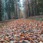 Bodennahe Aufnahme eines mit Laub bedeckten Waldweges